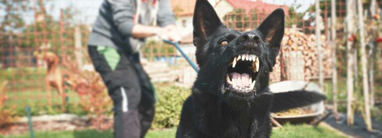 Picture of a person trying to control their dog because they know of the on-bite rule